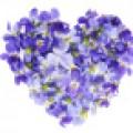 jezelf viooltje